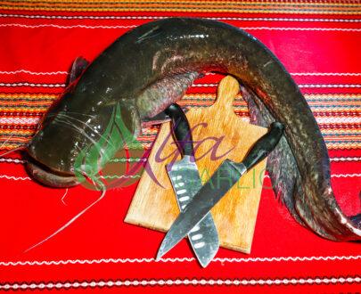 Сом, Риба, Прясна риба, Жива риба