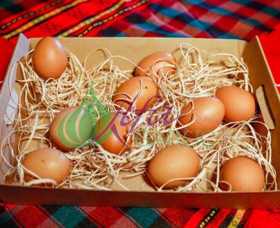 Яйца, Яйца от кокошка