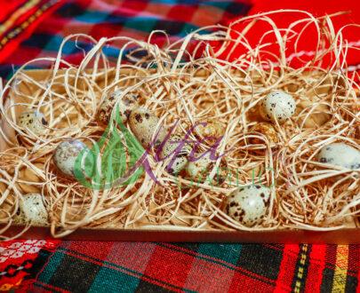 яйца, Яйца от пъдпъдъци
