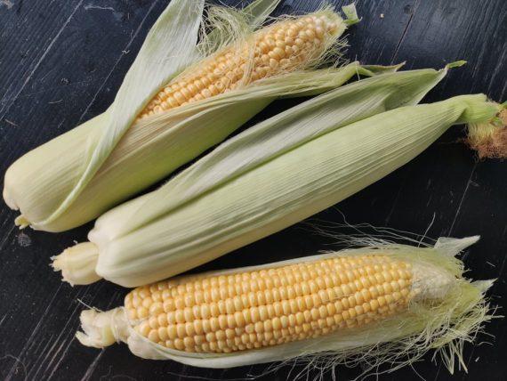 Царевица, българска царевица, млечна цревица, царевица кочан