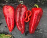 Чушки, Български червени чушки, червена капия, Чушка, Червена чушка