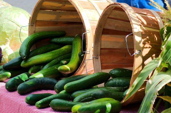 Гергана, селски краставици гергана, краставица