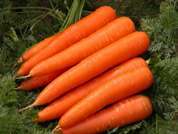 Моркови, Български моркови, морков, село