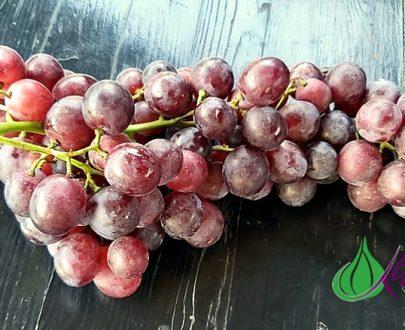 Червено грозде - Троя